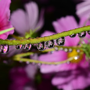 Water drops on flowers 206.JPG