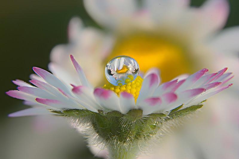 Fiore nel fiore di ramon63