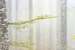 le prime foglie di mauro_moroni