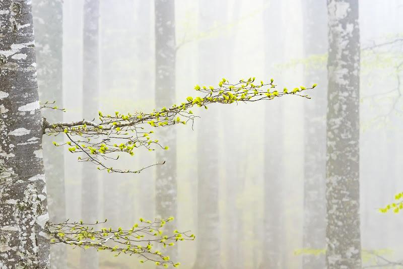 le prime foglie di Mauro Moroni
