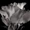aIMG_2041_crBW.jpg