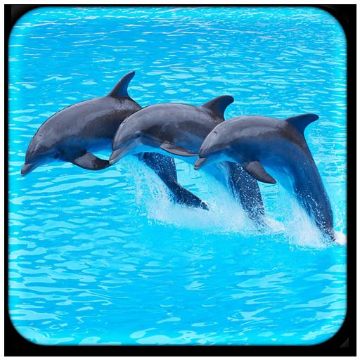 海豚動態壁紙 個人化 App LOGO-硬是要APP