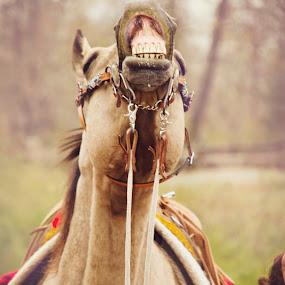 Good Morning by Tara McKenzie - Animals Horses ( #horseart, #horse, #funnyfaces, #horselovers, #mornings, #horsephotography, #equine, #ranchlife )
