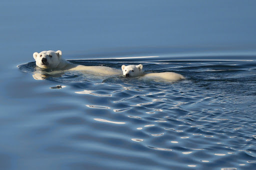 Ponant-Bellot-polar3.jpg - Watch the locals take a dip on a Ponant cruise through Northern Canada.