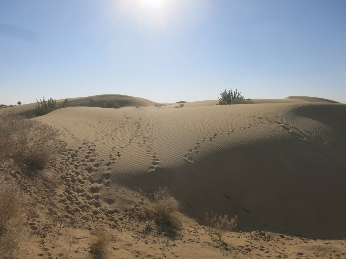India. Rajasthan Thar Desert Camel Trek. Our first sand dunes, the Kadar dunes