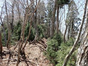 幼木が多い
