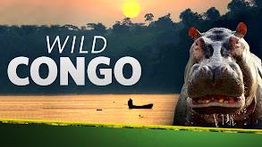Wild Congo thumbnail