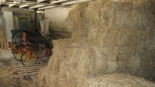 La vieille grange, refuge des hirondelles rustiques
