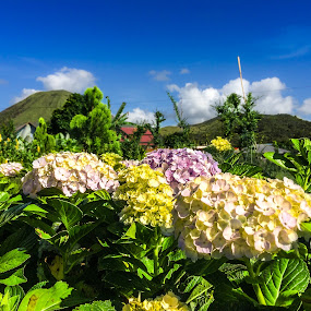 Tomohon Flower City by Rizal Pungus - Flowers Flower Gardens
