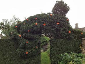 Photo: Topiary cat