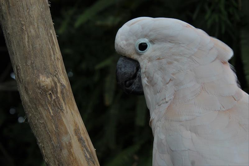Parrot di BiancaDumitruPH