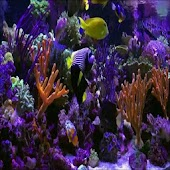 HD AQUARIUM LIVE WALLPAPER