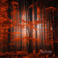 Photo: Red Parallel Universe