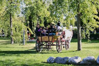 Photo: Giro in carrozza sotto le betulle