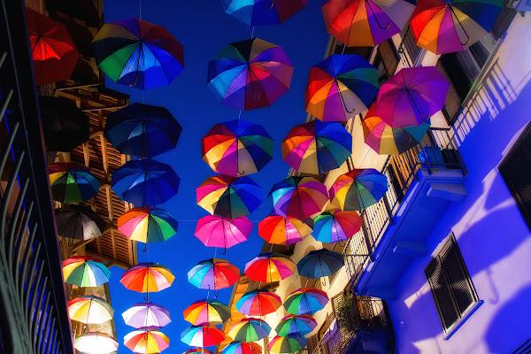 Senza pioggia, sotto gli ombrelli di Picchiolino