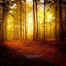 """Photo: The Smell of Autumn  Ballade matinale en forêt. Morning walk in the forest.  Et toujours sur le blog : • Photos d'automne : http://www.naturephotographie.com/category/portfolios/les-4-saisons/automne/ • ebook sur la Photo de Paysages (FR-US) : http://www.naturephotographie.com/blog/paysages-naturels-et-photographie/ • Inspiration : """"The Cream of Landscape Photographers"""" http://www.naturephotographie.com/photographes-du-monde/  Enjoy ;-)"""