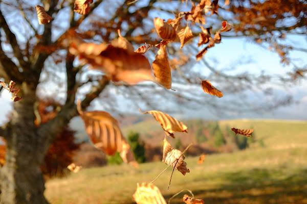 flying leafs di giacomobe