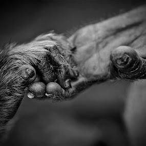 a helping hand by Little Shogun - Animals Other Mammals