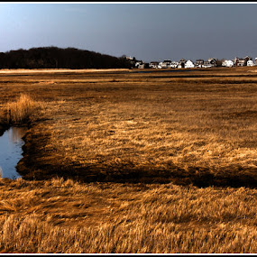 Home by Noah ONeill - Landscapes Prairies, Meadows & Fields