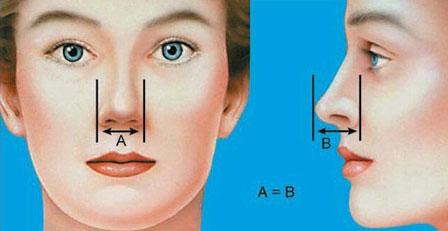 ویژگی بینی های گوشتی