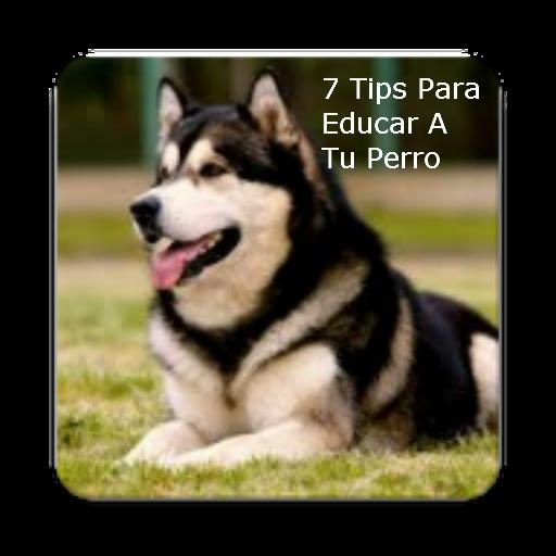 7 Tips Para Educar A Tu Perro