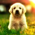 Yavru Köpek Videoları icon
