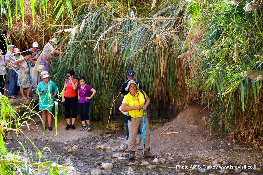 Экскурсия в заповеднике Эйн-Гиди с гидом в Израиле Светланой Фиалковой.