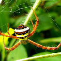 Orb weaver signature spider