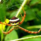 Orb weaver signature spider