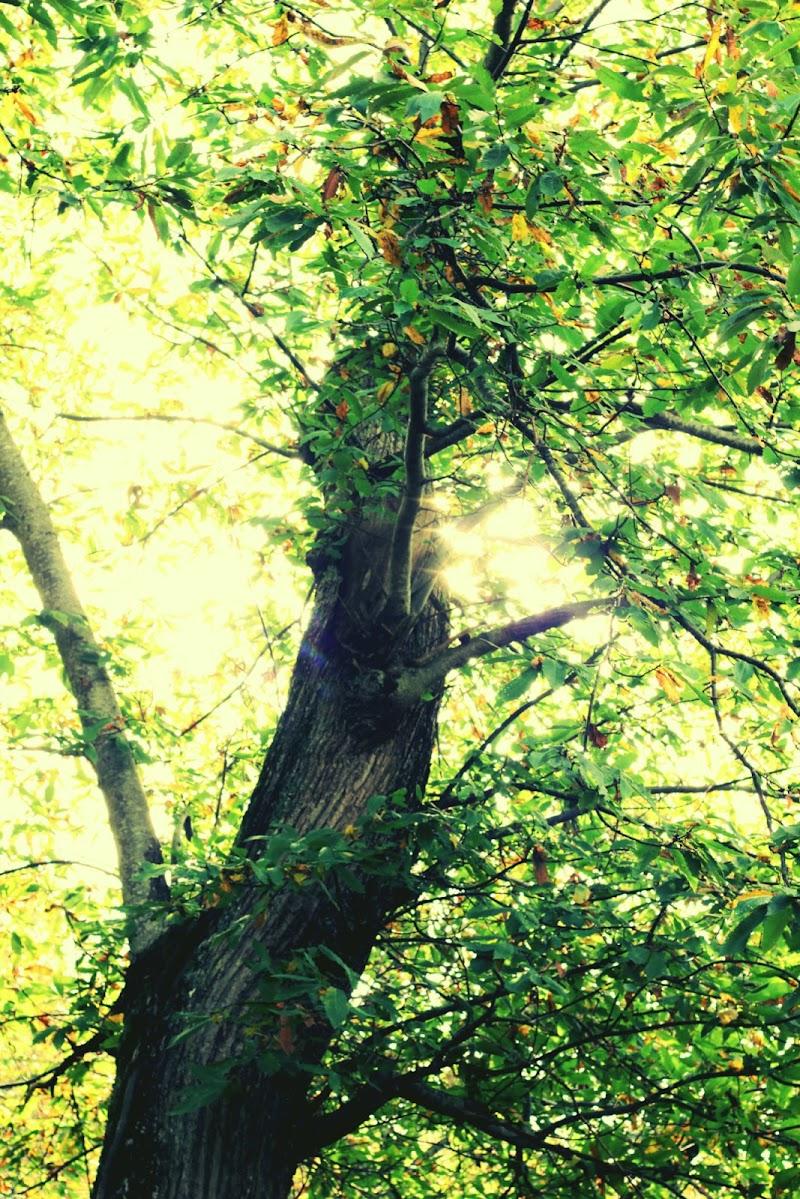 Green wood di PhotoBySaraPesucci