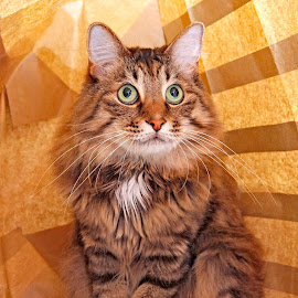 Paper bags are the best! by Mia Ikonen - Animals - Cats Portraits ( mia ikonen, expressive, kurilian bobtail, funny, finland )
