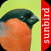 App Icon for Vogel Id - Vögel im Garten App in Czech Republic Google Play Store