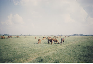 Photo: The Land of Horses