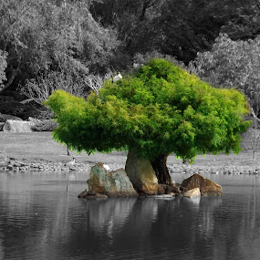Osasis by Jan Crawford - Nature Up Close Trees & Bushes ( water, b&w, tree, green, japanese gardens, spot colour,  )
