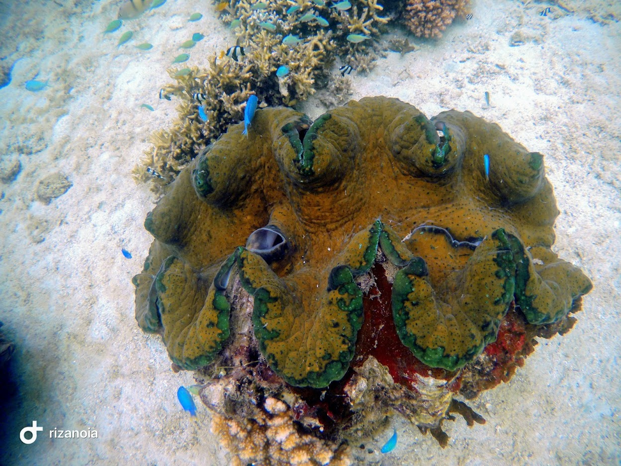 Giant Clam Sanctuary Travel Guide