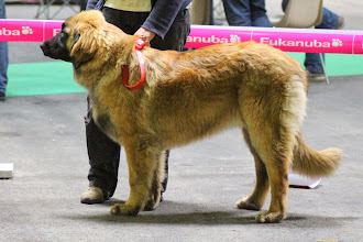 Photo: Puppy Femelles : Ibanez de l'Arc en Ciel à Nageoires