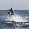 Big Game Fishing Madeira icon