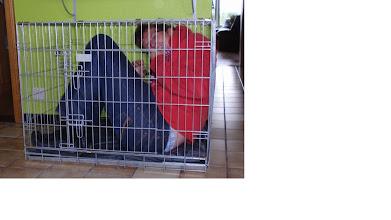 Photo: waar dienen baasjes voor...ja ook, om uit te testen of de bench voldoende groot is