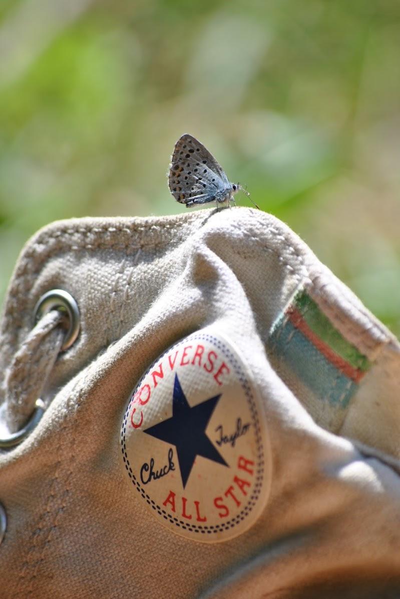 Farfalla di Macra di Alirubamele