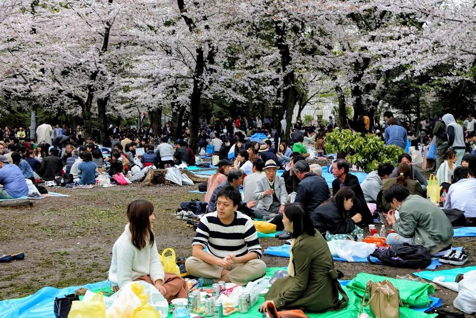 Hanami w parku Ueno
