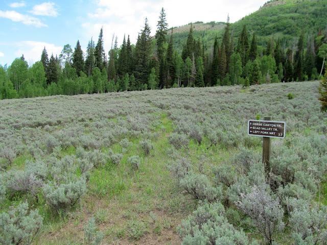 "Scad Valley ""Trail"""