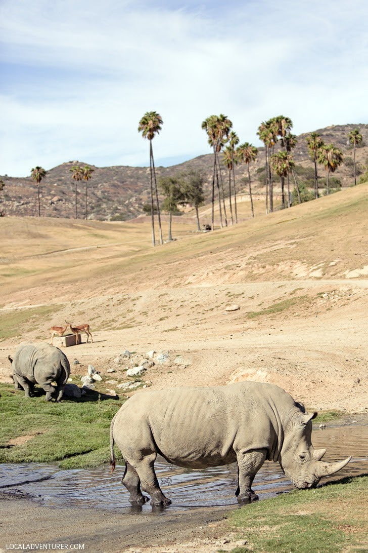 San Diego Zoo Safari Park (Best Southern California Attractions).
