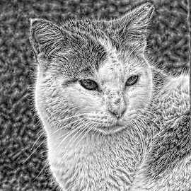 by Betty Taylor - Digital Art Animals ( cat portrait, cats, monochrome, black and white, presents )