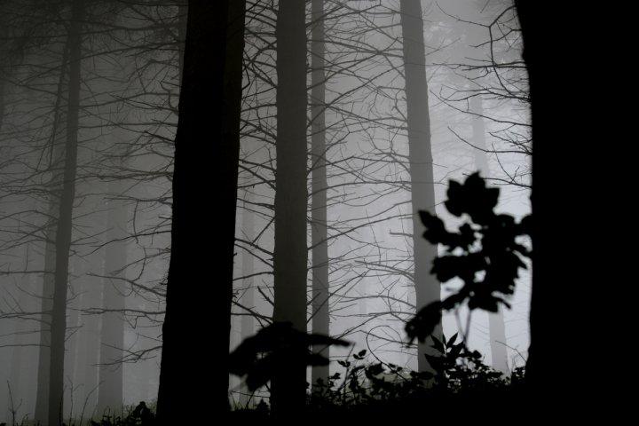 Ombre nel bosco di Danny Joe