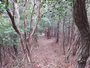 傾斜が緩み灌木帯に