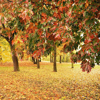 Foglie su, foglie giù di