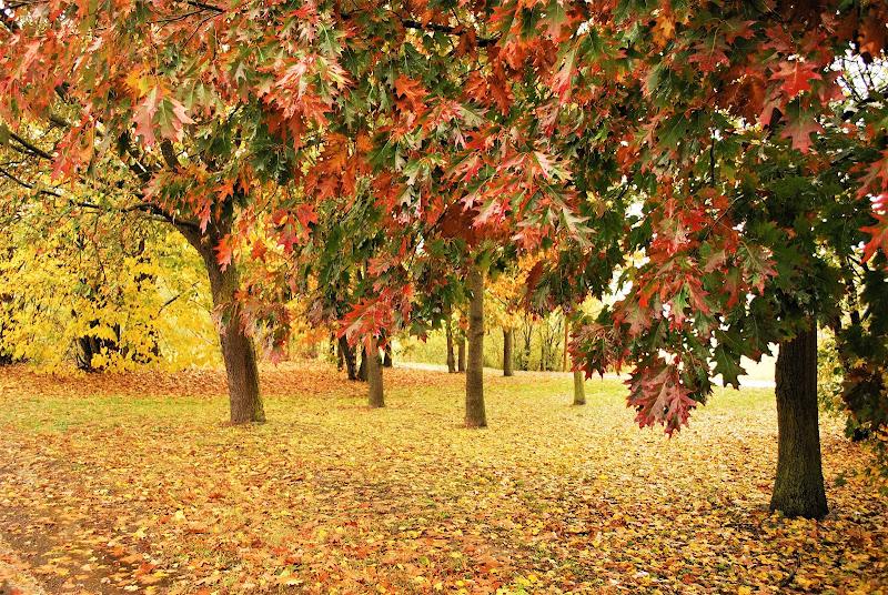 Foglie su, foglie giù di Daimon