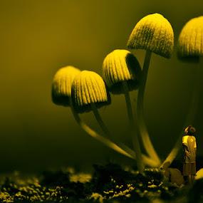 Dreamland by Muhammad Buchari - Digital Art Things