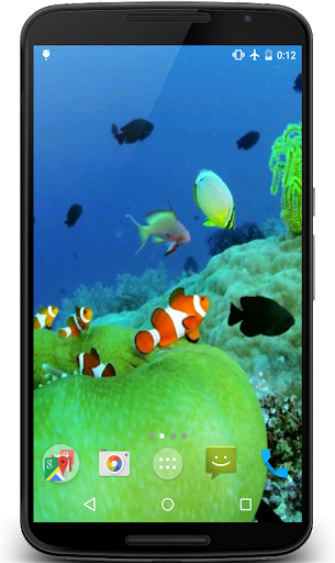 Clownfish Video Live Wallpaper