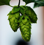 Thirsty Nomad Brewing Hops for Tomorrow